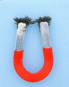 Horseshoe Magnet with Iron Filings